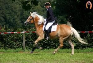 haflingerstaldeflammert.nl-website-20090209-222847-421877