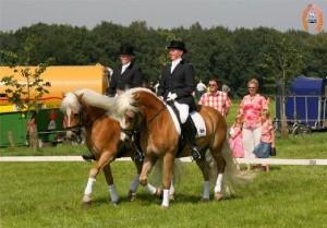 haflingerstaldeflammert.nl-website-20090209-223018-265627
