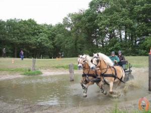 haflingerstaldeflammert.nl-website-20070415-020928-20110530-195406-973686