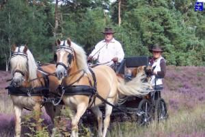 haflingerstaldeflammert.nl-website-20030123-125546-20081021-211526-671879