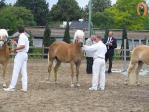 haflingerstaldeflammert.nl-website-20081123-212426-984378