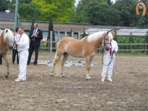 haflingerstaldeflammert.nl-website-20081123-212506-906253