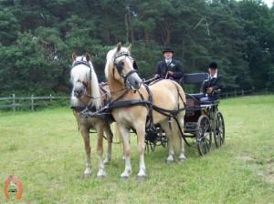 haflingerstaldeflammert.nl-website-20060430-102218-20090209-201451-484378