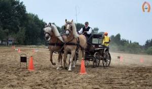 haflingerstaldeflammert.nl-website-20060430-104106-20090209-202816-375003