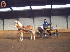 haflingerstaldeflammert.nl-website-20091120-211623-353617