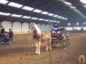 haflingerstaldeflammert.nl-website-20091120-211641-090085