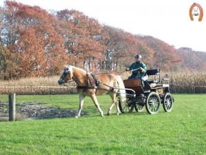 haflingerstaldeflammert.nl-website-20091114-191343-199711