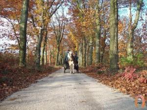 haflingerstaldeflammert.nl-website-20091114-191406-548362