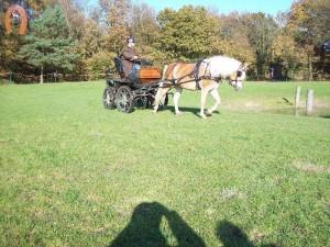 haflingerstaldeflammert.nl-website-20091114-191428-147468