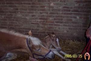 haflingerstaldeflammert.nl-website-20091123-215350-235884