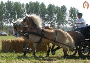 haflingerstaldeflammert.nl-website-20090502-153931-20090601-203259-281254