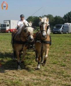 haflingerstaldeflammert.nl-website-20090502-161015-20090601-203400-421878