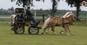 haflingerstaldeflammert.nl-website-20090711-141205-20091114-191627-196281