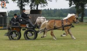 haflingerstaldeflammert.nl-website-20090711-141303-20091114-191701-713055