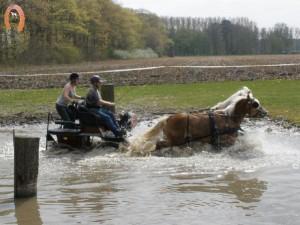 haflingerstaldeflammert.nl-website-20100430-221921-973780