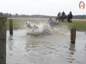haflingerstaldeflammert.nl-website-20100430-222056-859325