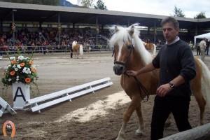 haflingerstaldeflammert.nl-website-20091118-221252-927808