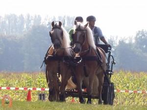 haflingerstaldeflammert.nl-website-20091114-194557-233730
