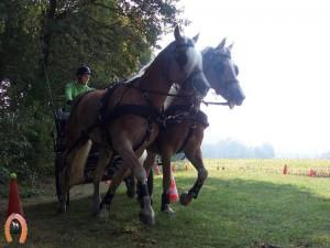haflingerstaldeflammert.nl-website-20091114-194632-472495