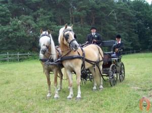 haflingerstaldeflammert.nl-website-20091118-221734-394338