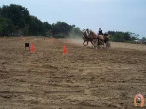 haflingerstaldeflammert.nl-website-20091118-221745-566106