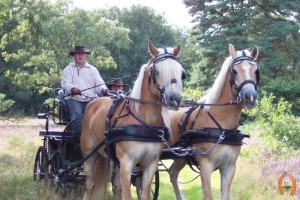 haflingerstaldeflammert.nl-website-20091118-221845-840162