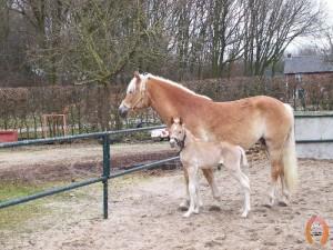 haflingerstaldeflammert.nl-website-20100508-193824-224087