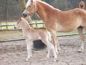 haflingerstaldeflammert.nl-website-20100508-193850-448809