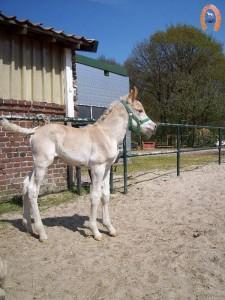 haflingerstaldeflammert.nl-website-20100508-194033-893225