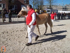 haflingerstaldeflammert.nl-website-20070204-002551-20110319-203345-544046