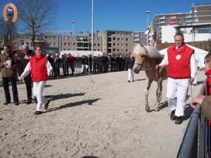 haflingerstaldeflammert.nl-website-20070204-003712-20110319-203457-991865