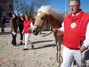 haflingerstaldeflammert.nl-website-20070204-003853-20110319-203524-788949
