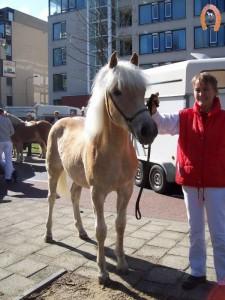 haflingerstaldeflammert.nl-website-20070204-010050-20110319-203655-436808