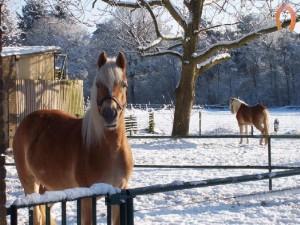 haflingerstaldeflammert.nl-website-20090105-141846-20090209-223159-765628
